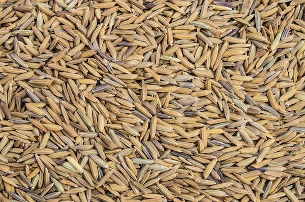 Riz Paddy ©Naruden Boonareesirichai - shutterstock