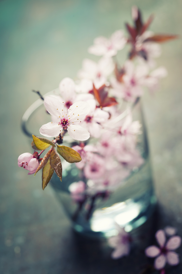 Fleur déco © Natalia Klenova - shutterstock
