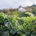 Vignoble - Roumanie ©Calin Stan shutterstock