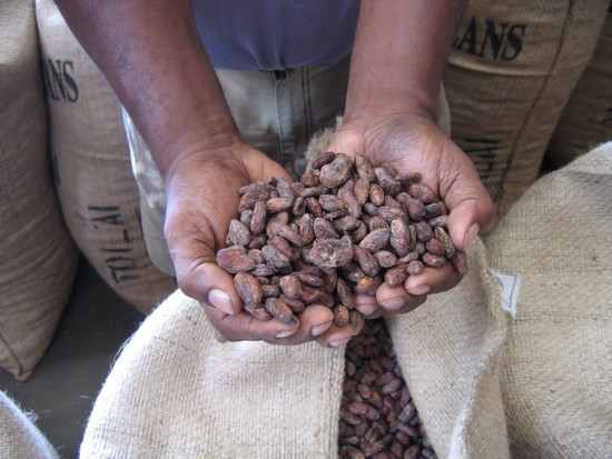 Fèves de cacao ©Valrhona