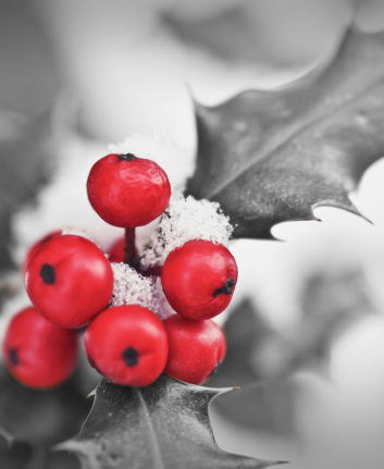 Noël ©Delpixel shutterstock