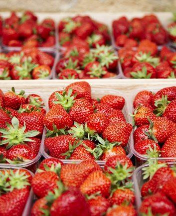 La fraise du Périgord (c) Sarlat Tourisme