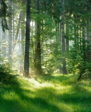 Dans les bois © Moravska shutterstock