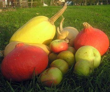 Fermes des légumes oubliés - Achats