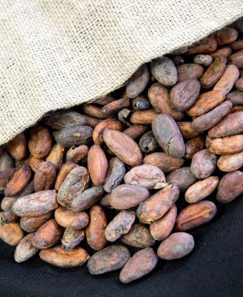Fèves de cacao (c) Valrhona
