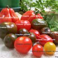 Tomates assortiment