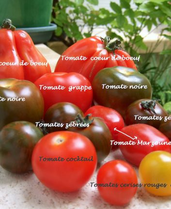 Tomates assortiment