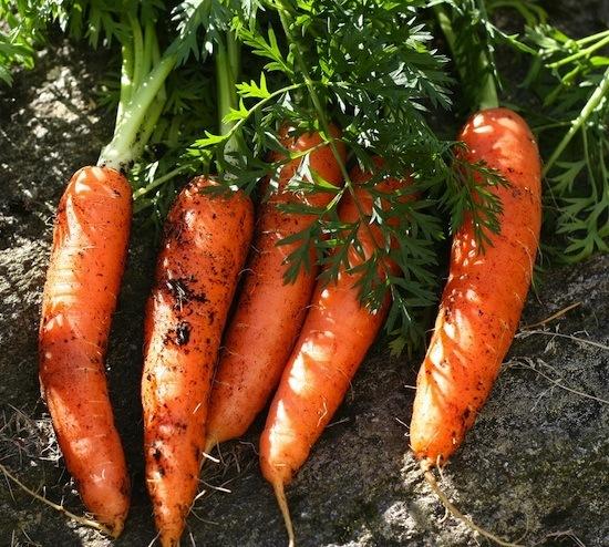 Qu 39 utilisez vous pour r per les carottes - Robot pour raper les carottes ...