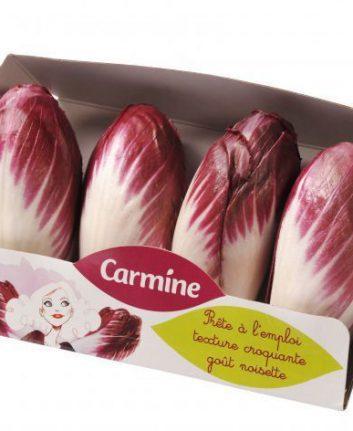 Endive Carmine