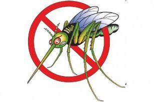 Halte aux moustiques
