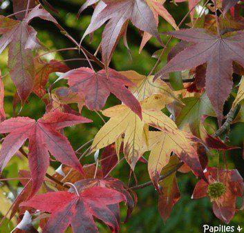 KKVJ couleur d'automne