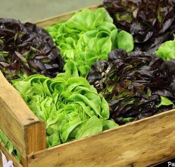 Cuisinez vos salades