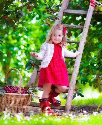 Cueillette des cerises ©FamVeld
