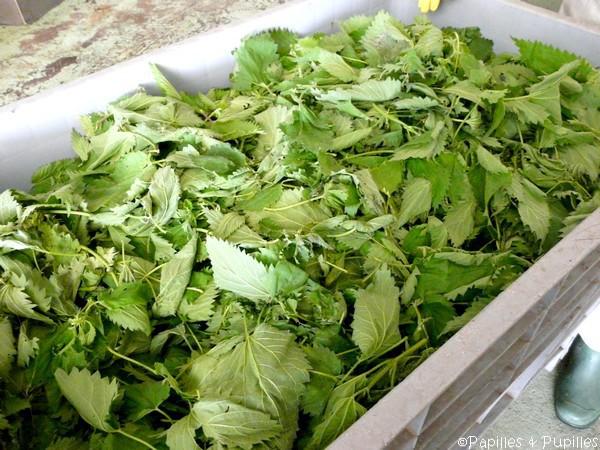 Orties fraîches - Oh légumes Oubliés