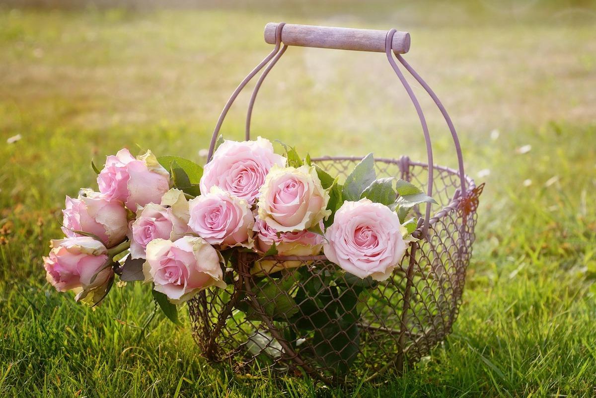 Roses de Mai (c) Castelguard CC0 Public domain Pixabay