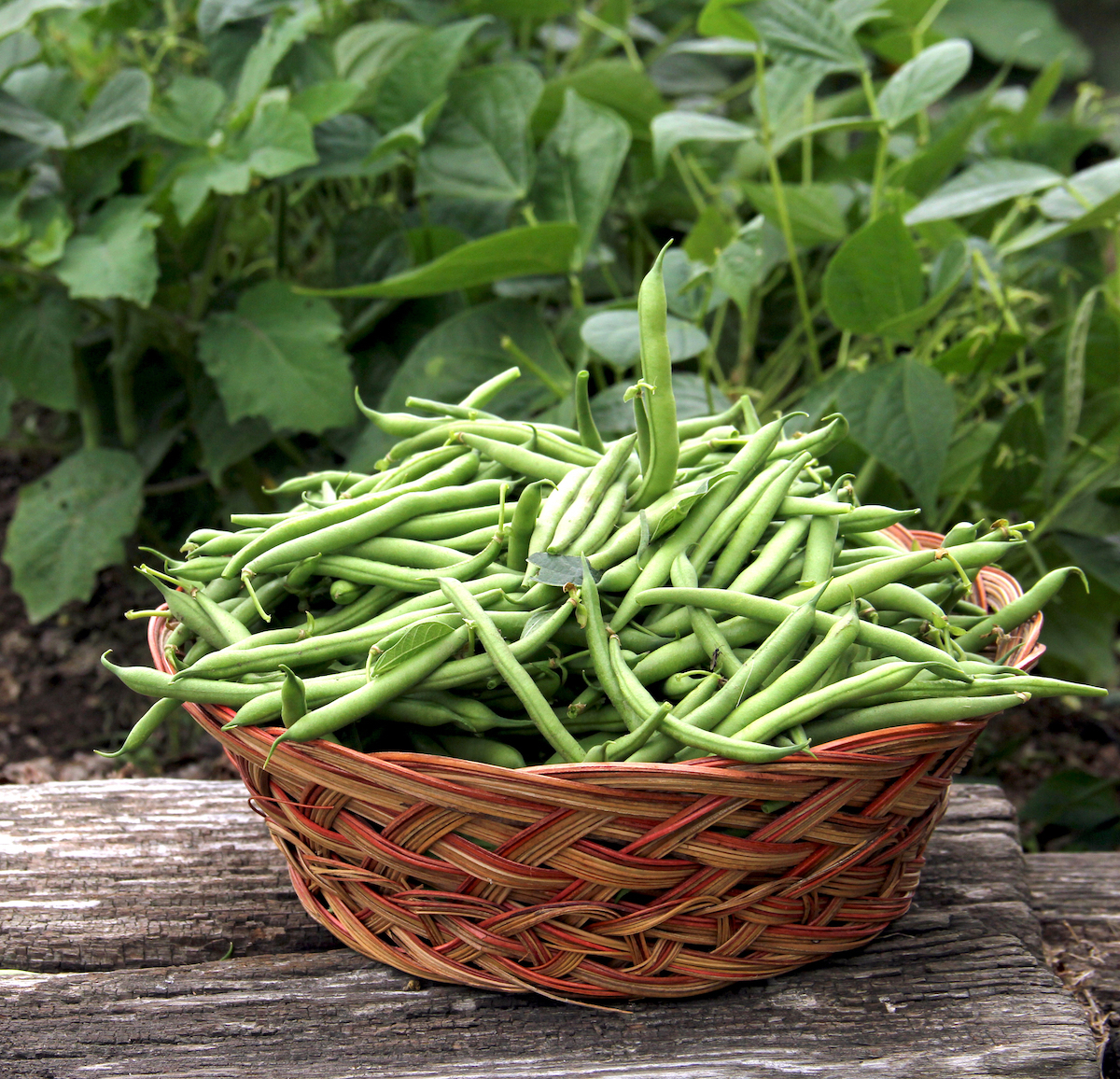 Haricots verts © dcwcreations. shutterstock