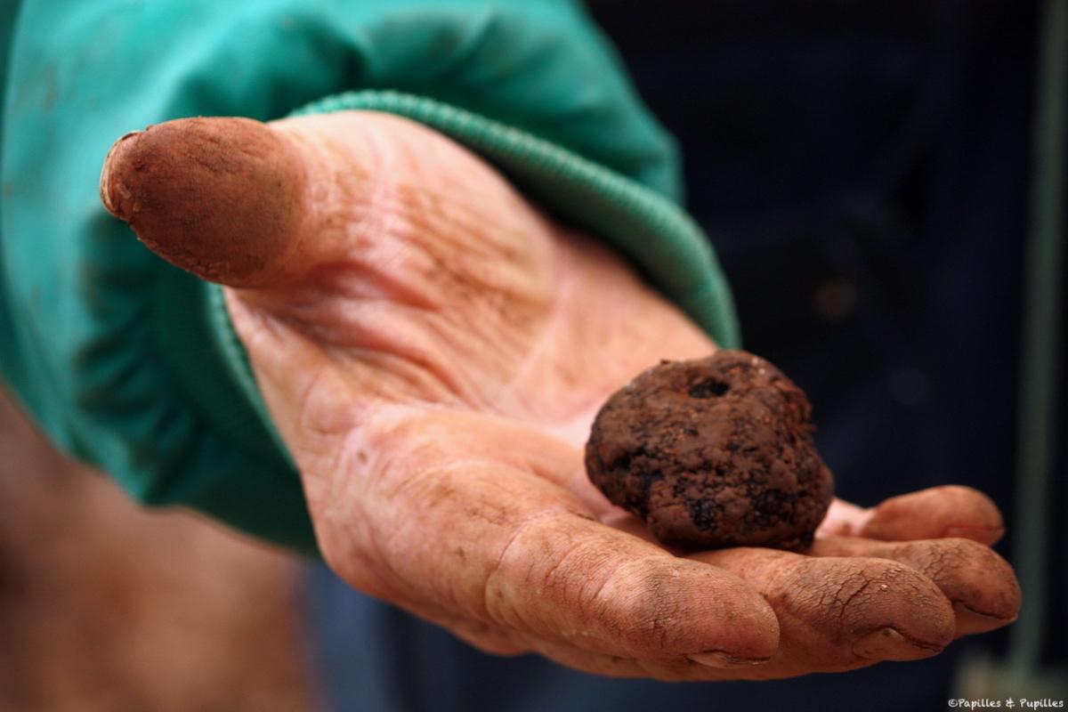 Truffes noires de Corrèze