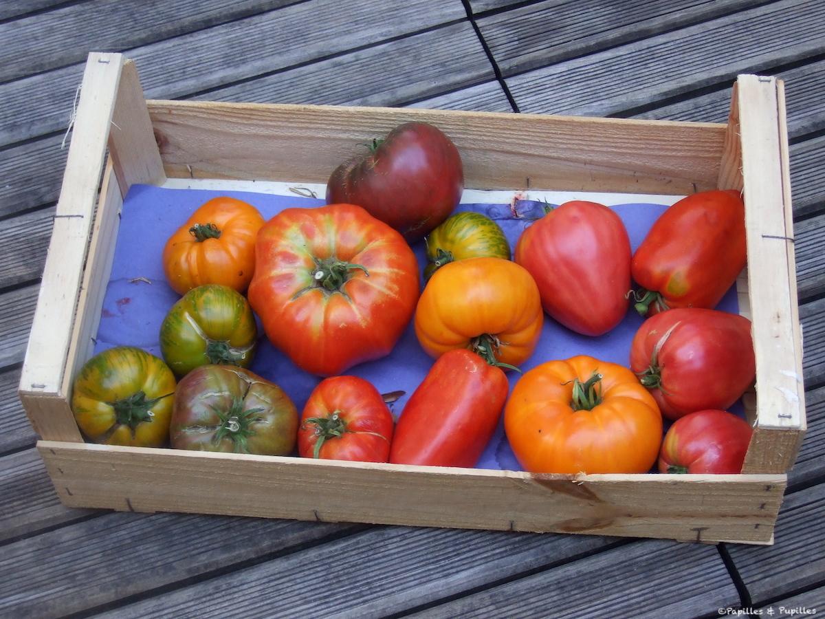 Tomates de Damien