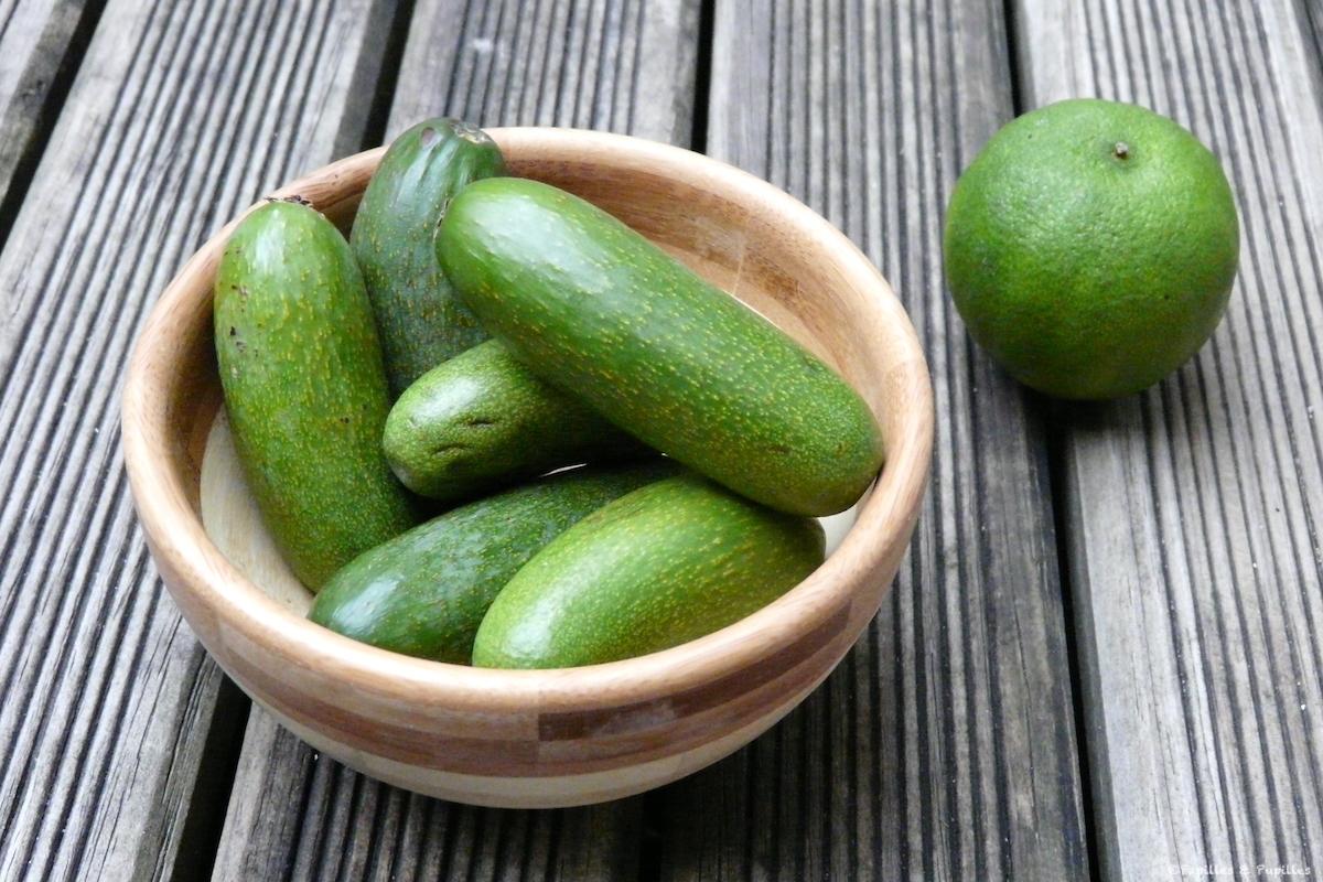 Avocats cornichons