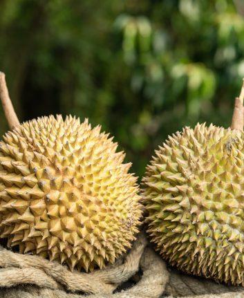 Durian ©Hendra+Su shutterstock