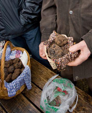 Truffes noires ©Philippe 1 bo shutterstock