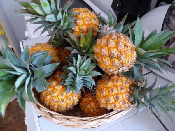Ananas Victoria (c) alexia davignon CC BY-NC 2.0