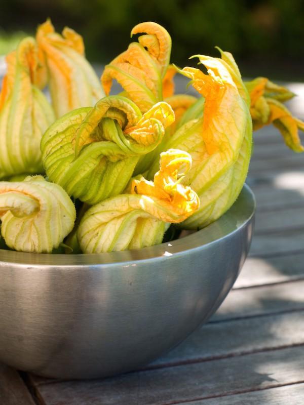 Fleurs de courgettes ©Wiktory shutterstock