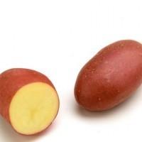 Pomme de terre Chérie