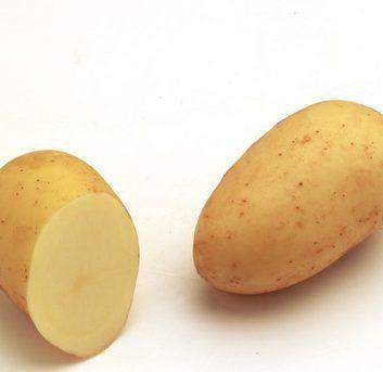 Pomme de terre Charlotte