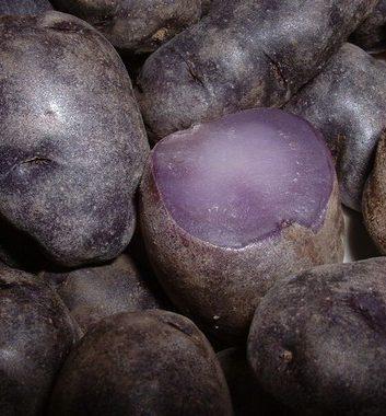 Pomme de terre Vitelotte