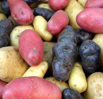 Pommes de terre - Différentes variétés