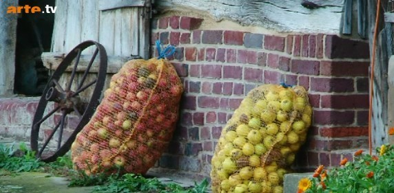 Pommes pour cidre
