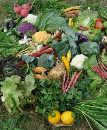 Légumes ©Joël Thiebault