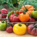 Tomates - Différentes variétés ©Candus Camera shutterstock