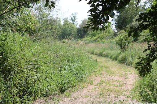 Chemin Ile d'Arcins