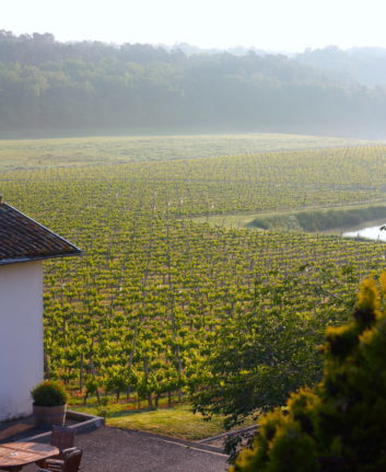 Lever de soleil sur les vignes