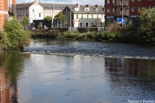 Lee river - Cork