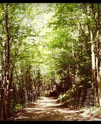 Sous bois - Canyon de la rivière sainte Anne