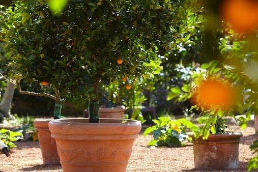 St James - Oranger © Hervé Lefebvre