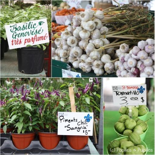 Basilic, ail avec tige, piments et tomatillos