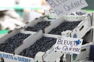 Bleuets du Quebec