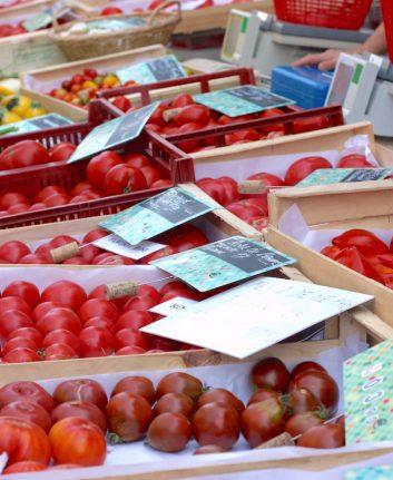 Différentes variétés de tomates - Mme Filliolaud