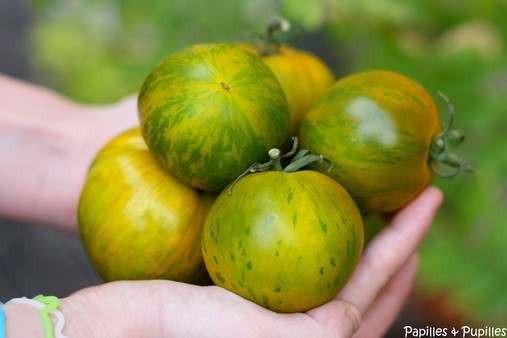 Tomates Green Zebra