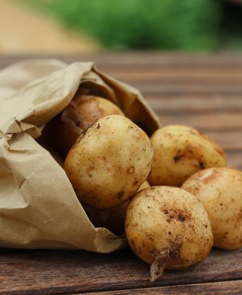 Pommes de terre (c) Lehtta1 CC0 Pixabay