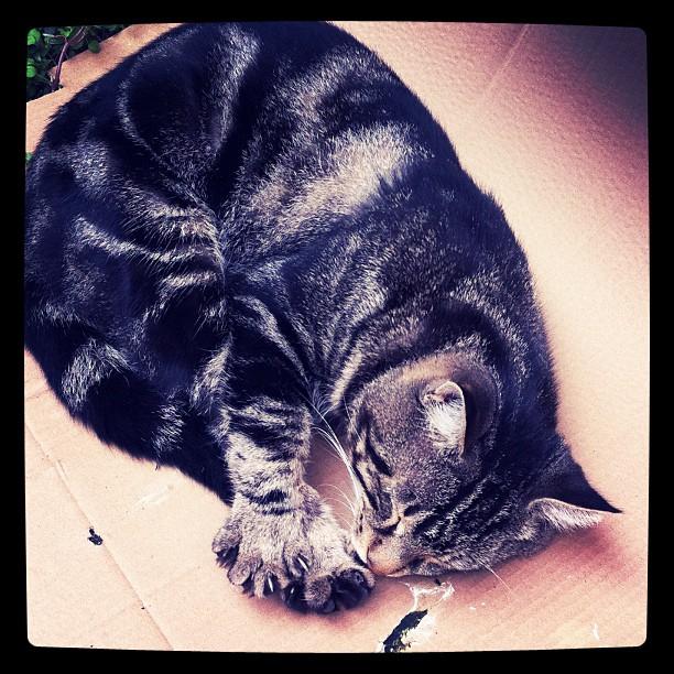 Cat's story