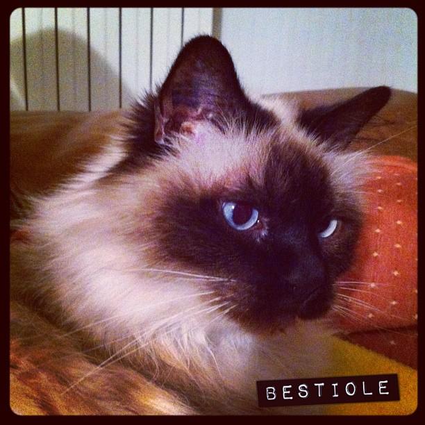 Cat tweet ^_^