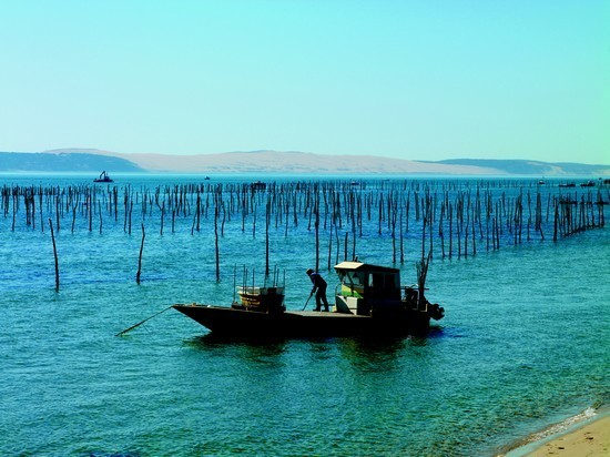 Huitres Arcachon Cap-Ferret - Parc à huîtres