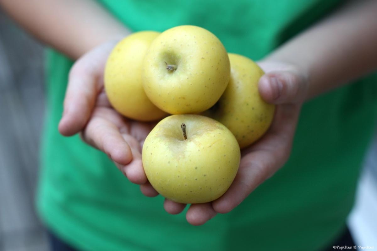 Pommes Reinette dorée