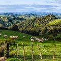 Nouvelle Zélande ©Shay Yacobinski shutterstock