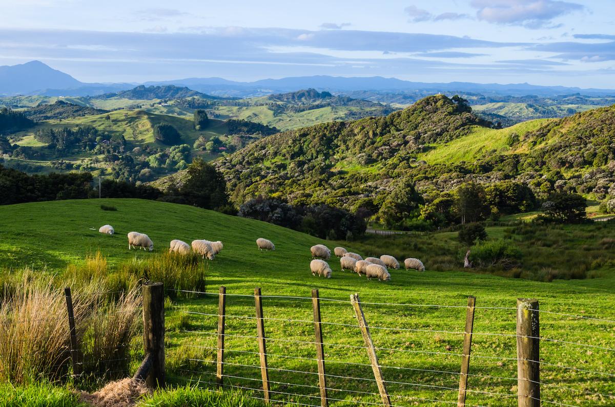 végétarien rencontres Nouvelle-Zélande